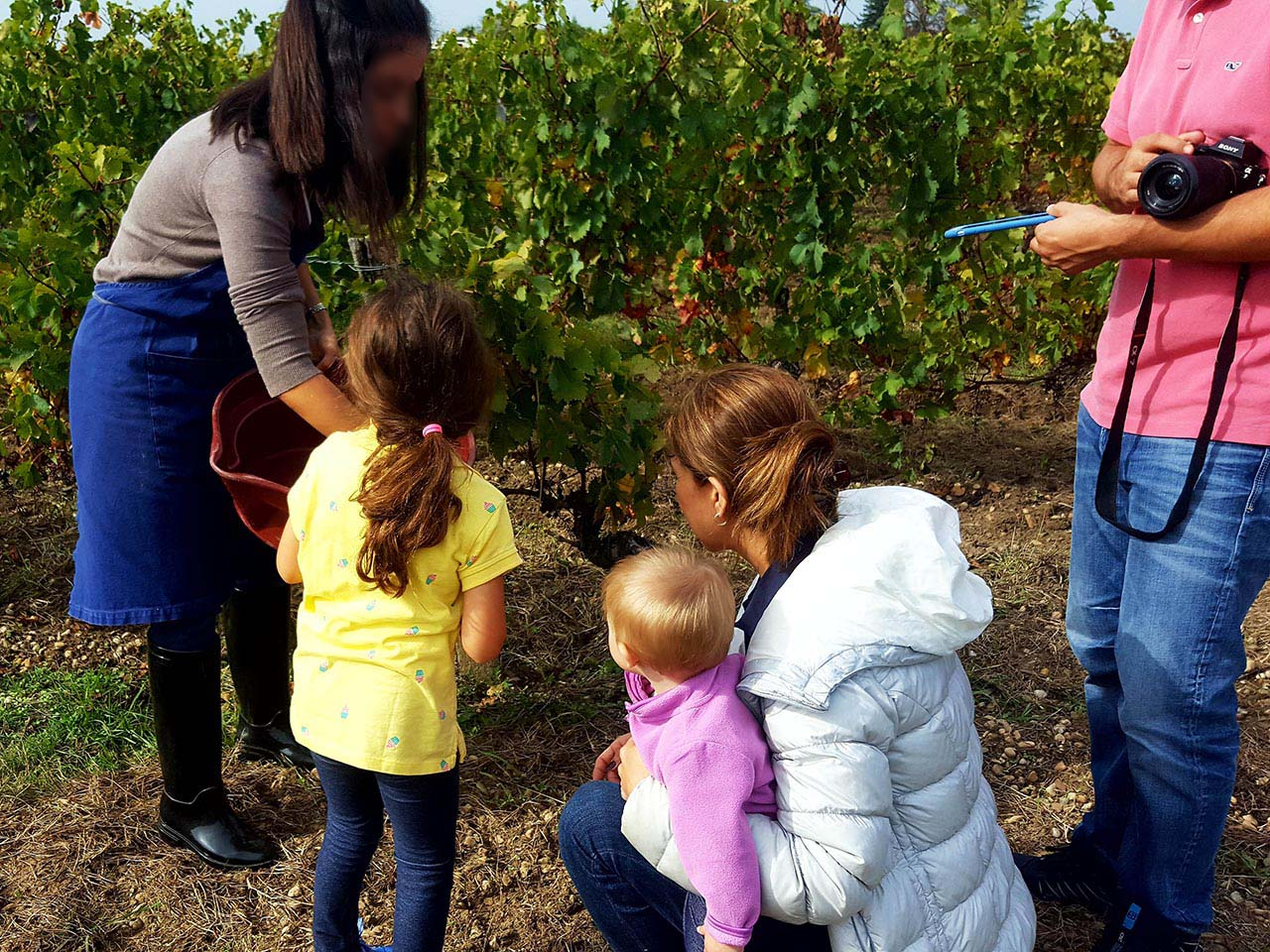 Family-friendly-Bordeaux-wine-tours-kids-harvesting